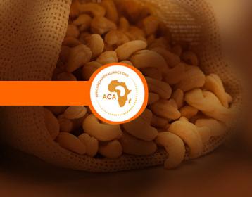 01 bismi-cashew-banner